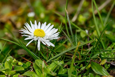 white daisy flower on a meadow