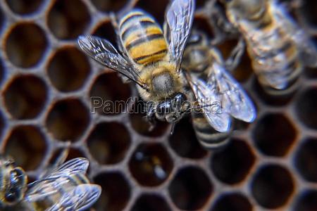 macro photograph of bees dance of