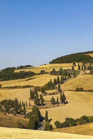 cipressi di monticchielo typical tuscan landscape
