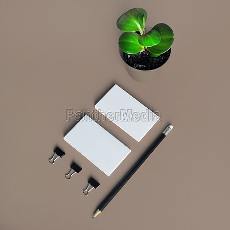 stationery and plant