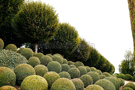 landscaped garden with boxwood balls near