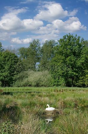 idyllic landscape in rhineland germany