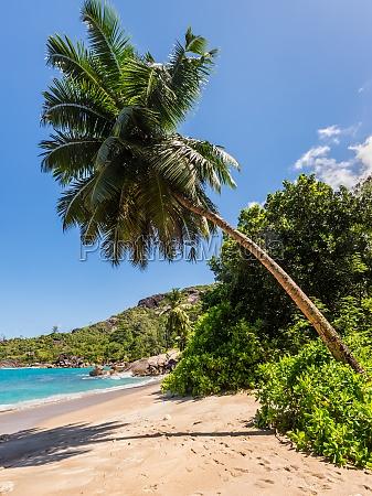 tropical beach with horizontal palm