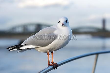 a seagull perches on a railing