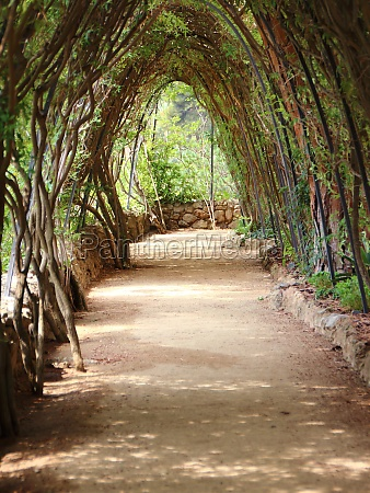 tranquil path under pergola with braid
