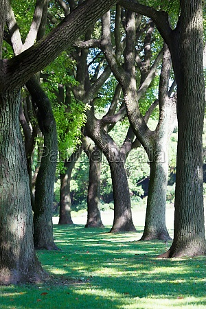 summer tree lined park