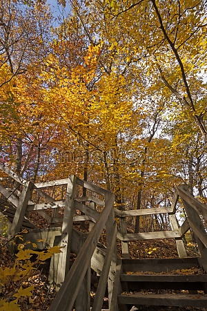 stairway into the fall