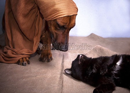 dog in scarf and lying black