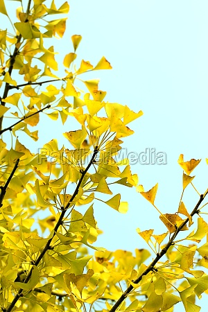 daylight scenery tourism natural beauty leaves