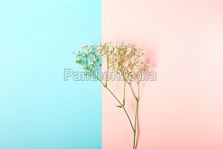 creative banner with fresh white babys