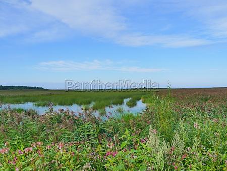 flowering flooded meadows summer landscape