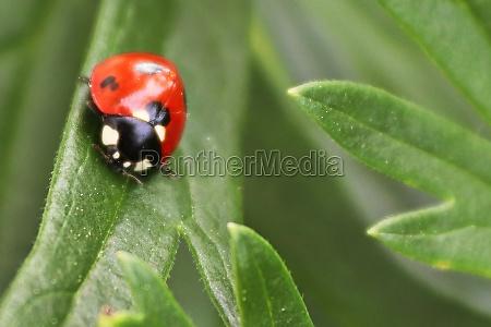 macro of a ladybug on a