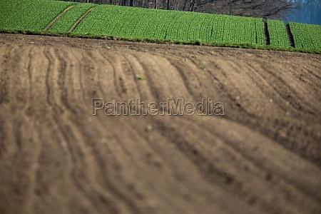 agricultural landscape arable crop field arable