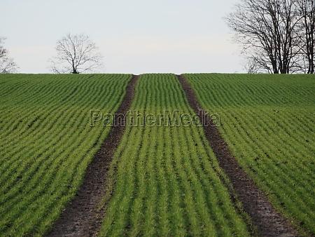 beautiful natural plantation aligned field organized