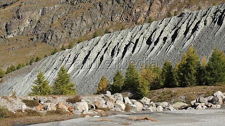 moraine and larch trees in zermatt