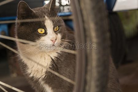 gray cat portrait between objects 2