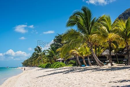 tropical le morne beach in mauritius
