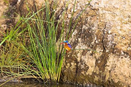 beautiful colorful bird kingfisher bird
