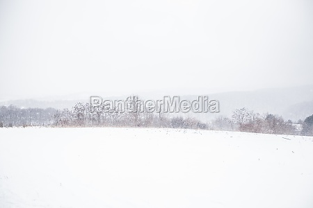 winter snowy day nature landscape