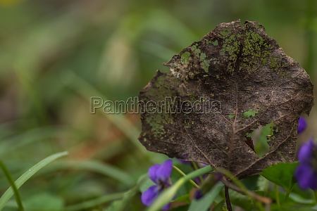 dried up leaf with structure in