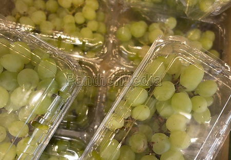 white grapes from the vineyard