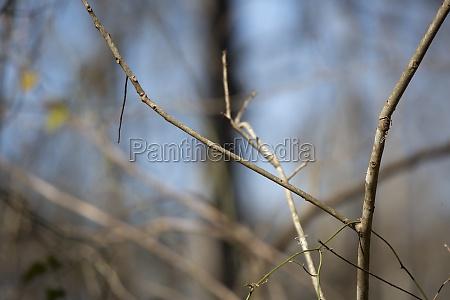 thin tree limbs