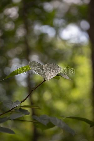 summer leaves