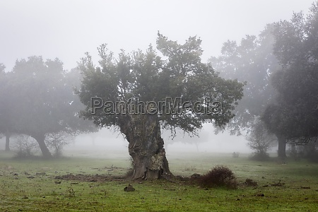 nice landscape with fog