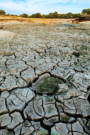 brown dry soil