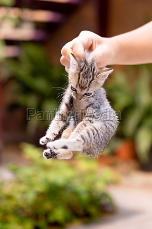 hands holding a cute kitten