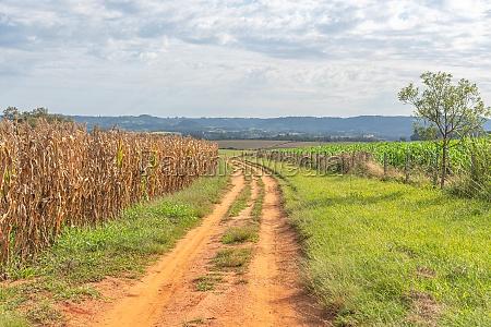 dirt road in farm area next
