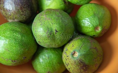 fresh avocado fruits ready for consumption
