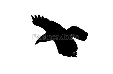 silhouette of a bird in flight