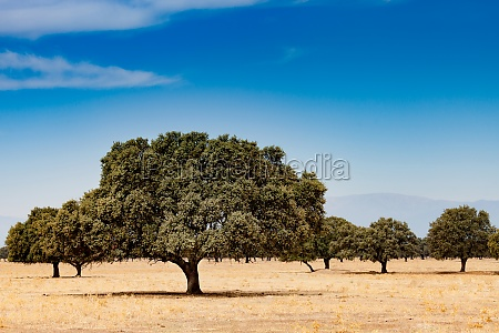 trees in the dry field