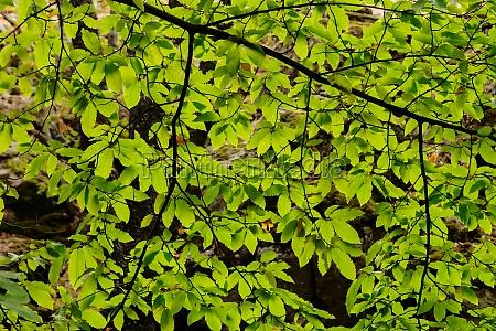 tree full of leaves