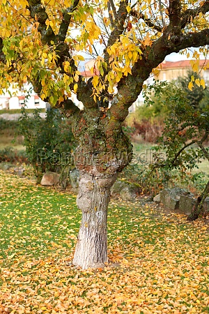 solitary park full of yellow leaves