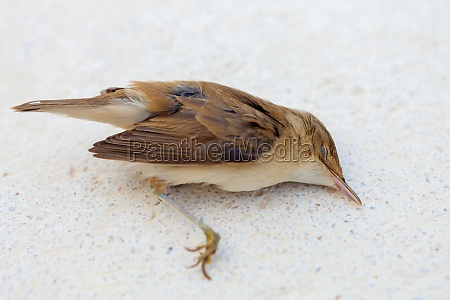 dead small bird