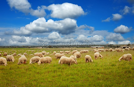 beautiful meadow with free livestock