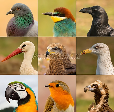 collage with differents birds