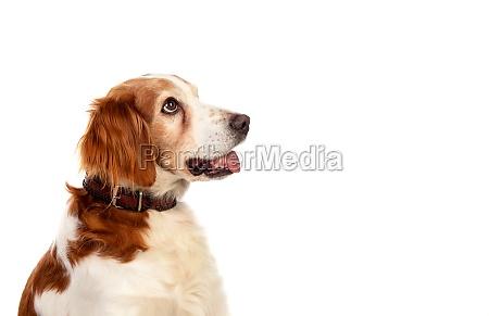 beautiful portraits of a dog