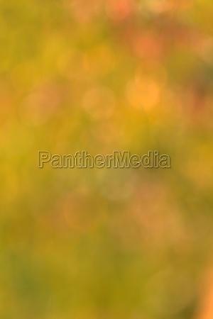 blur background of grass