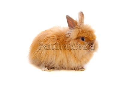 beautiful brown rabbit toy with long