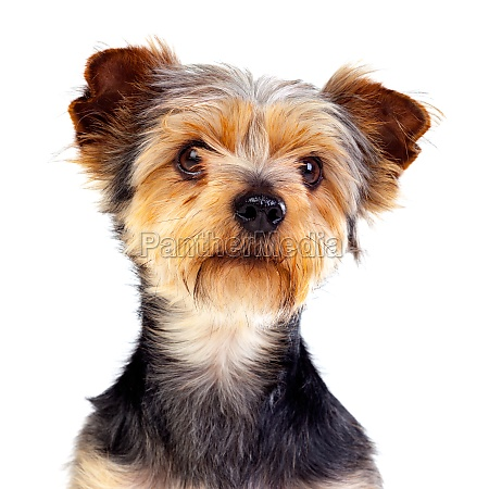 cute small dog with cutted hair