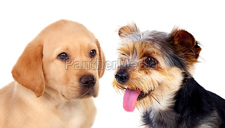 cute small dogs isolated