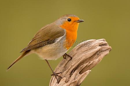 pretty bird with a nice orange