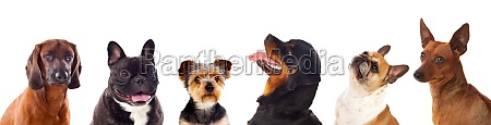 six differents dogs