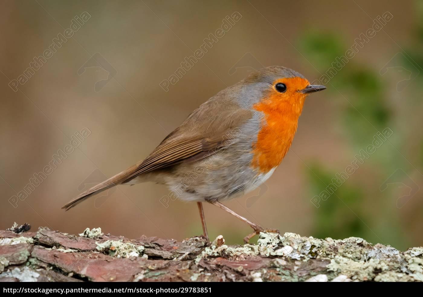 pretty, bird, with, a, nice, orange - 29783851