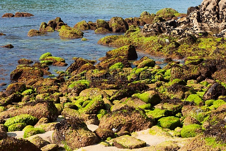 natural beach with green rocks