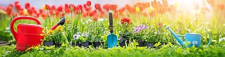 beautiful flower seedlings growing in the