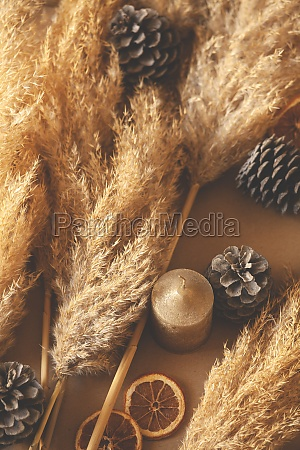 decorative branches of pampas grass set